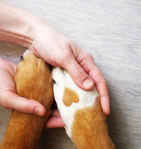 assurances chiens