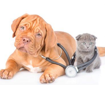 assurance santé chien chat