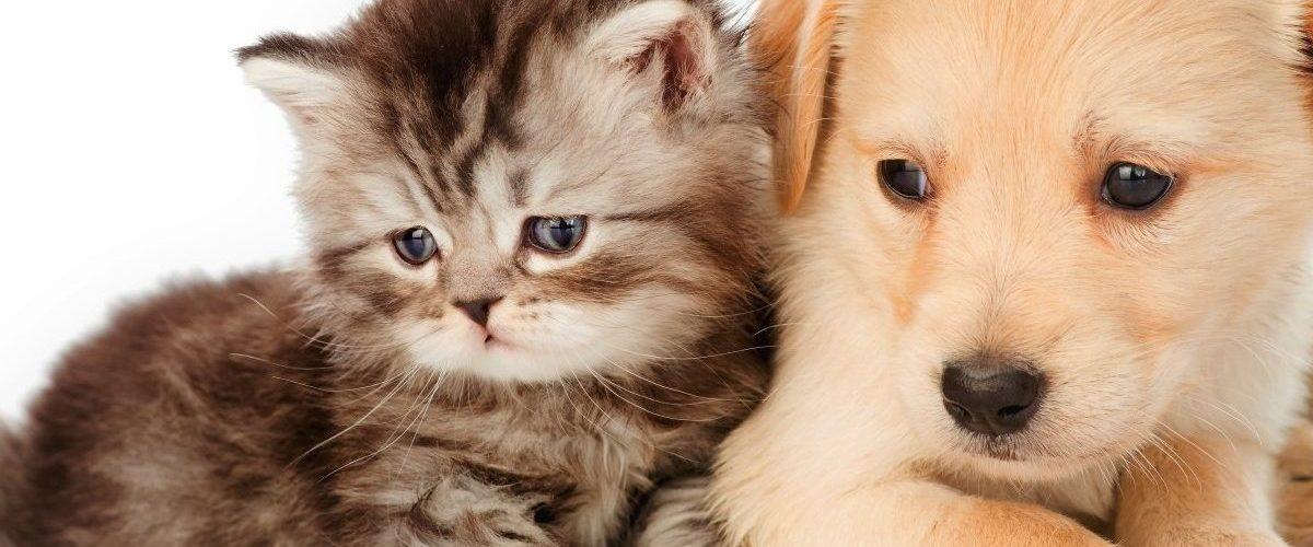 Comparaison entre une assurance-santé chat et chien